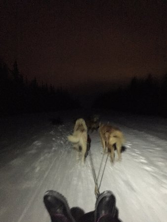 1st Alaska Tours: MUSHING!