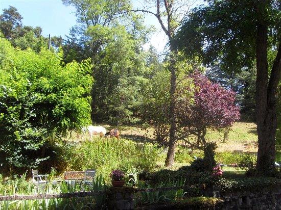 Hotel Des Pins : Jardin