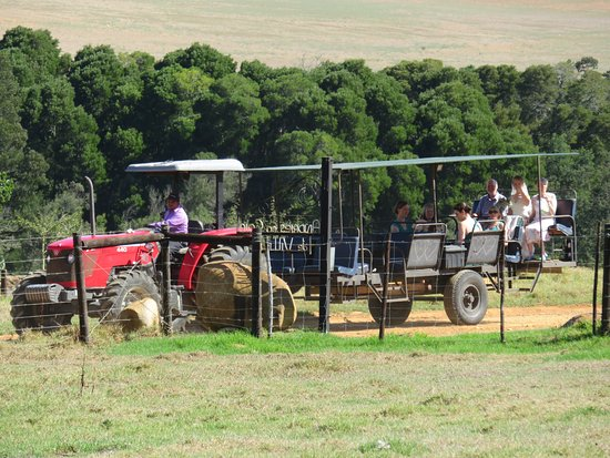 Stanford, Sudáfrica: Tractor rides for the bride or your guests