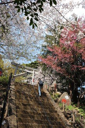 Komagome Fuji Shrine: 社殿は富士山頂に