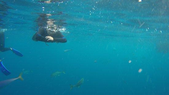 Blue Wilderness Shark Adventures: Blue Wilderness 01/04/17