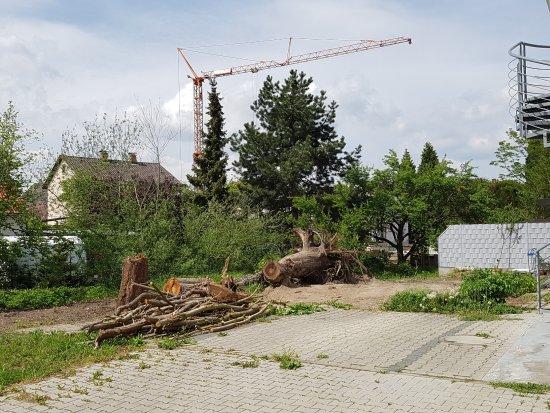 Waghausel, Germany: Stinkbach Baumsterben