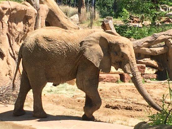 Dallas Zoo: photo2.jpg