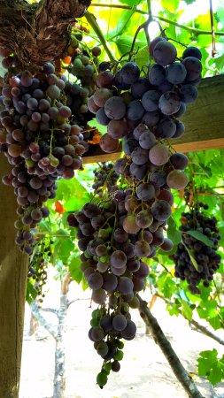 Uncorked Wine Tours: Second Vineyard