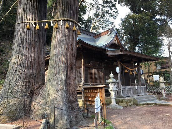 Hie Shrine: A pair of giant oak trees