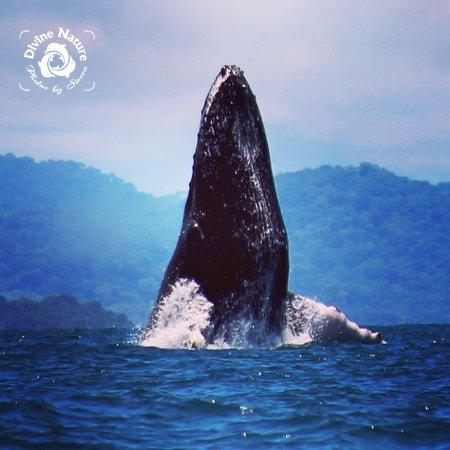 Drake Bay, Costa Rica: Humpback Heaven!