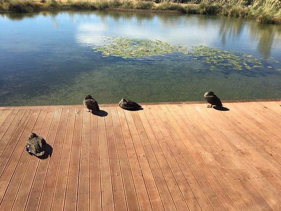 Twizel, Nova Zelândia: völlig idyllisch