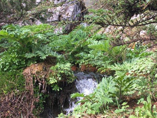 Jardin botanique Alpin de la Jaysinia : photo0.jpg
