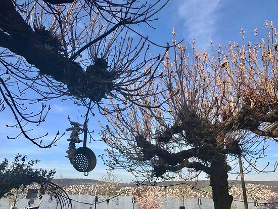 Ruschlikon, Zwitserland: Frühlingsgefühle im Villa-Garten ☀. Genuss pur zum Brunch, Lunch, Dinner mit Blick auf dem Züric