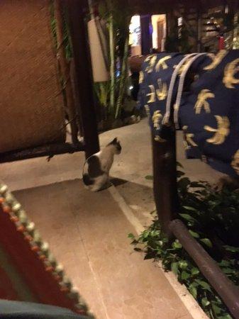 Hotel Playa del Karma: the friendly hotel cat