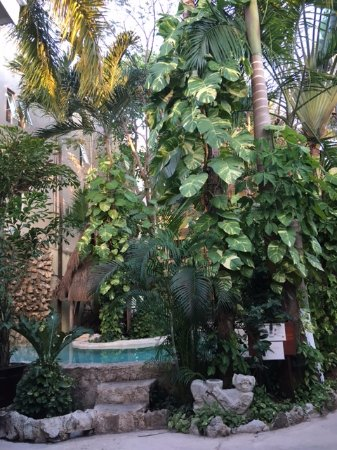 Hotel Playa del Karma: court yard / pool area