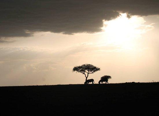 Safari Kenya Tanzania: Atardecer