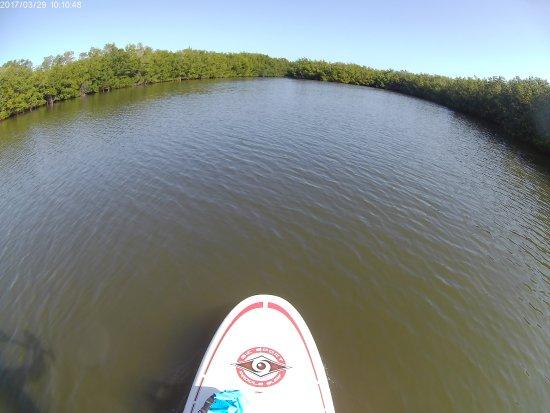 Adventure Kayaking: Mangroves ahead . . .