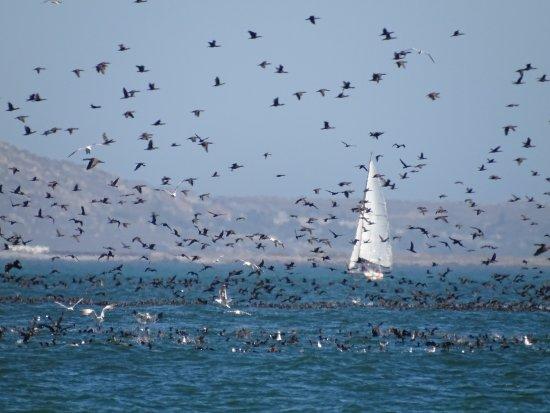West Coast National Park, Sudáfrica: Vögel...