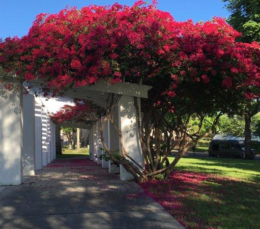 Lovely Arbor At Vinoy Park, St. Petersburg, Florida