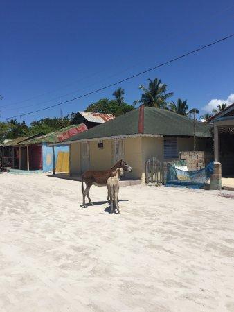 Bayahibe, Dominican Republic: photo3.jpg