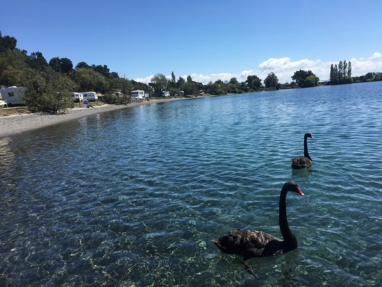 Turangi, نيوزيلندا: The neighbours taking a swim