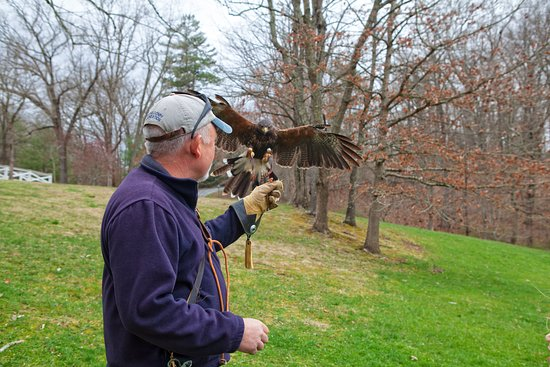 The Greenbrier Falconry: Handler with Hawk