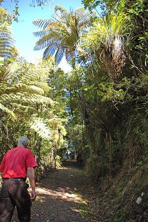Waiatarua, New Zealand: Onsite forest walks