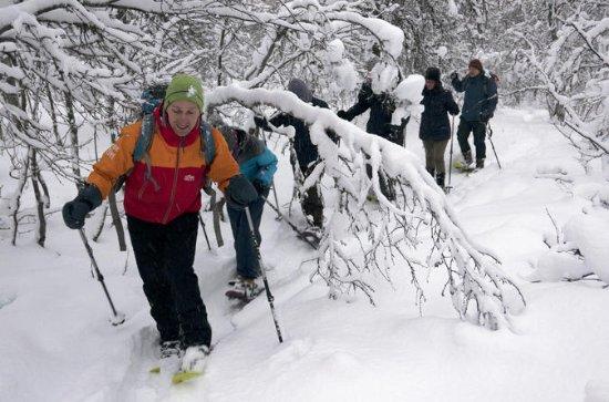 Tromso Tour: Tromsoya Island Snowshoe ...