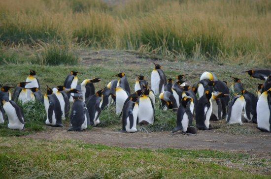 Tierra del Fuego, Chile: Hermosos y elegantes