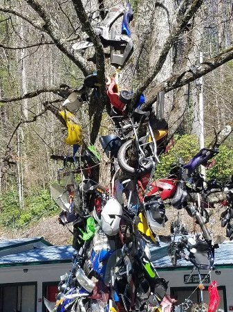 The Tree Of Shame At The End Of Dragon S Tail Parts From Bikes That