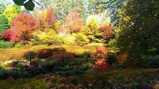 National Rhododendron Gardens: Autumn 3