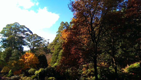 National Rhododendron Gardens: Autumn 4