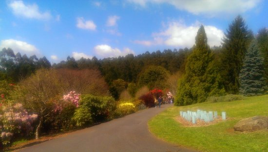 National Rhododendron Gardens: Spring 5