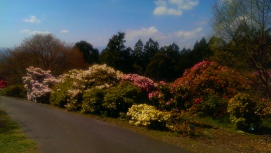 National Rhododendron Gardens: Spring 7