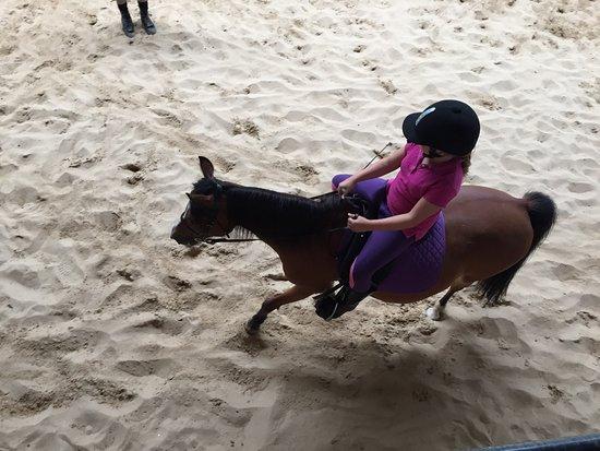 Arthurs Seat Indoor Equestrian Centre