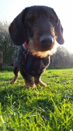 Графство Эссекс, UK: dawg