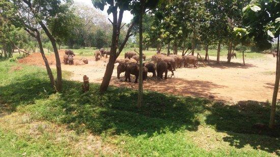 Bentota, Sri Lanka: elephant transit house feeding the baby elephants
