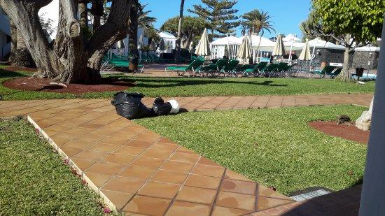 Apartamentos Barcarola Club: Early morning view from F7 terrace.