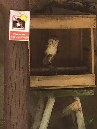 Photo of Nature Preserve Kuala Lumpur Bird Park at 920 Jalan Cenderawasih, Kuala Lumpur 50480, Malaysia
