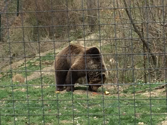 ‪Libearty Bear Sanctuary Zarnesti‬