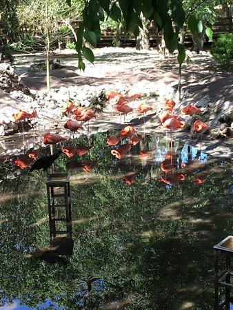 Омосасса-Спрингз, Флорида: Ellie Schiller Homosassa Springs Wildlife State Park