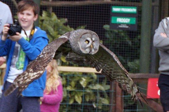 Screech Owl Sanctuary: Flying free