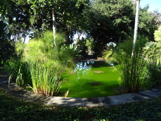 Jardin botanico december2016 bild fr n botanical for Sanse 2016 jardin botanico