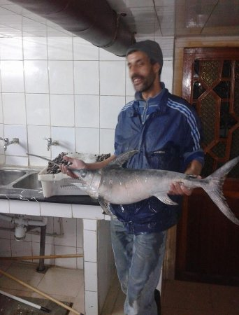 Oum Rabie - Restaurant & Bar : Fresh fish of the mediterranean