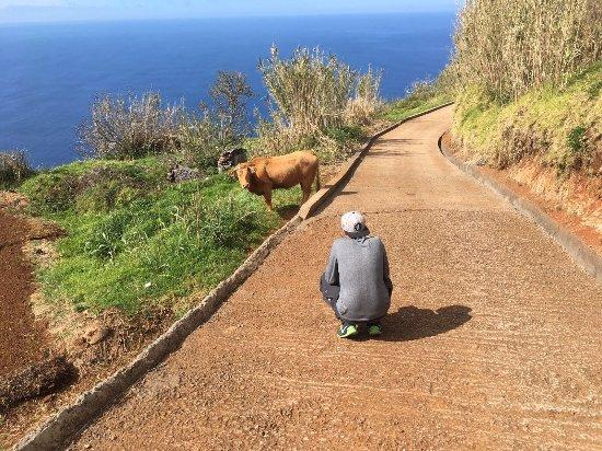 Madeira Native Motion: photo2.jpg