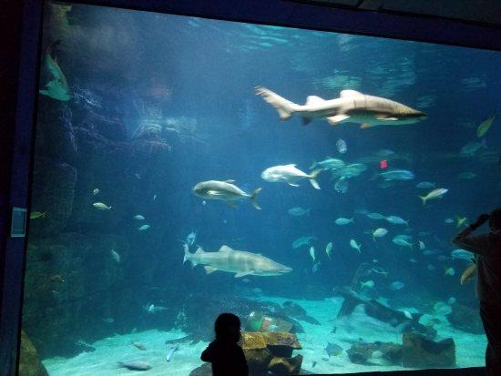 Virginia Aquarium Marine Science Center Beach Va Best