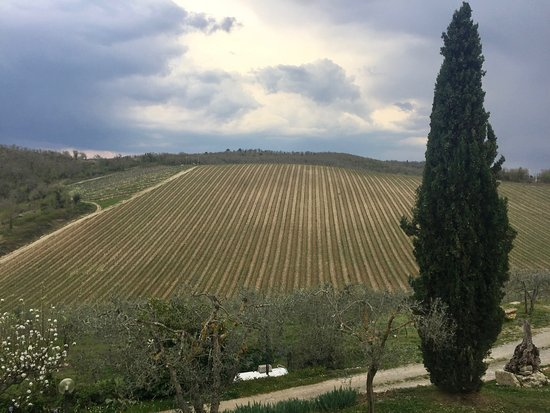 Take Me Out in Tuscany: Vineyards at Quercerto di Castellina