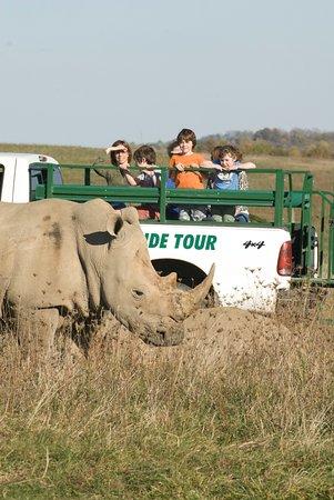 Cumberland, OH: The Wilds Open Air Safari