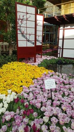 Bellagio Conservatory U0026 Botanical Garden: Japanese Garden Theme Bellagio  Gardens