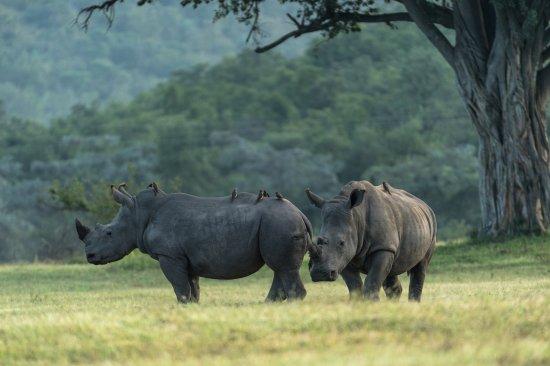 Welgevonden Game Reserve, South Africa: Safari Game