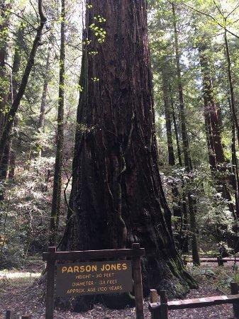 Guerneville, CA: Parson Jones Tree