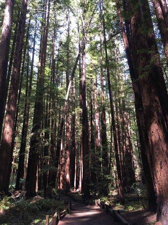 Guerneville, CA: Redwood forest