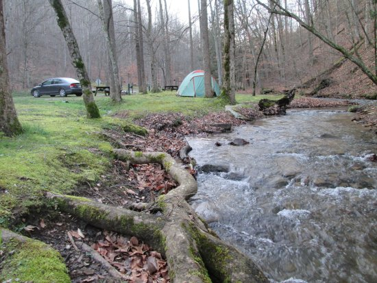 Kanawha State Forest: Camp site #45