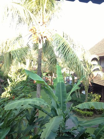 Ubud Bungalow: View from my balcony :)